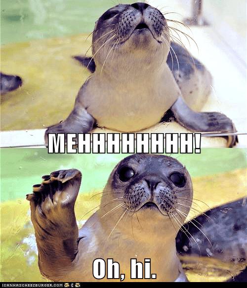 baby climb hello hi seal struggle wave - 5935168000