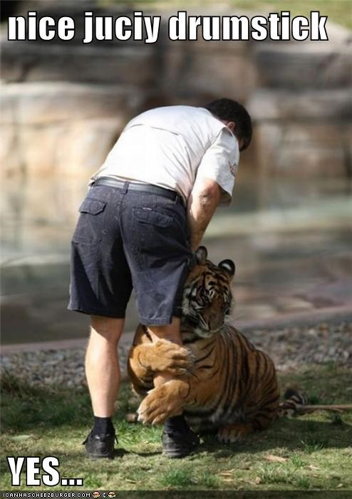 food,hug,human,hungry,leg,nom,prey,tiger,yum