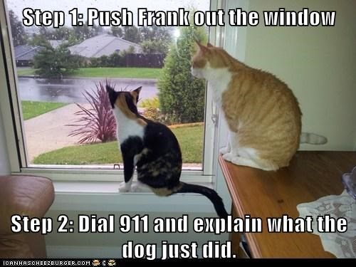 911,call,crime,dogs,explain,framing,one,out,push,step,two,window