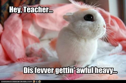 bunny feather learn school teach weight - 5935668224