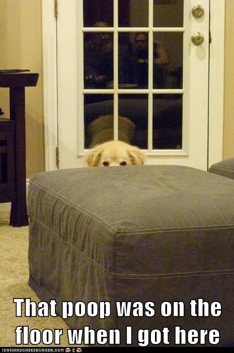 accidents,dogs,floor,golden retreiver,hiding,i swear,messes,peeking,poop
