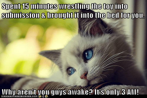 annoying awake early first world cat problems First World Problems Hall of Fame Memes sleep wake up whining - 5936895488