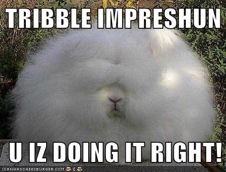 bunnies bunny doing it right impressions rabbits Star Trek - 5937292288