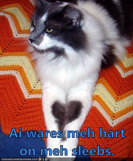 Cheezburger Image 5937511936