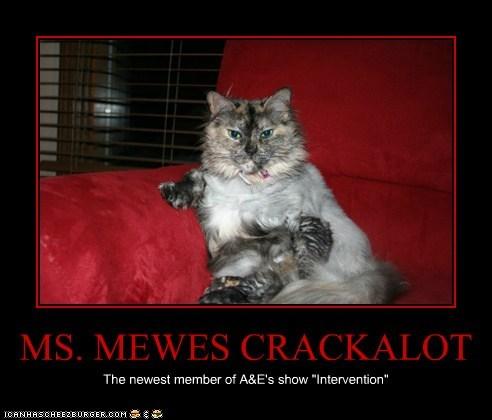 MS. MEWES CRACKALOT