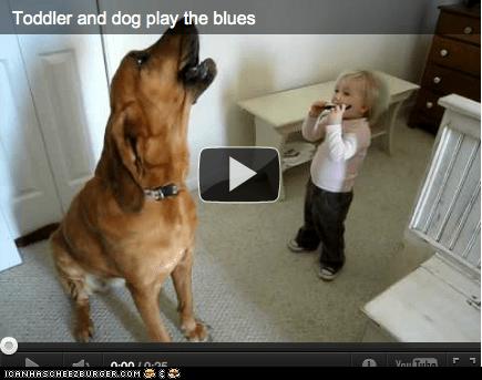 Babies dogs goggies kids Video