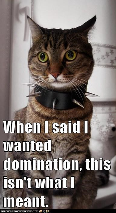 collar confused domination innuendo lolcats misinterpretation not said want when