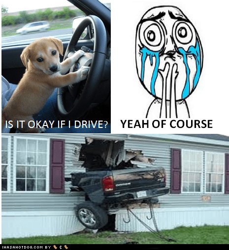 accidents,cute,cuteness overload,cyoot,dogs,driving,funny,goggies,Memes,multipanel,puppies,puppy
