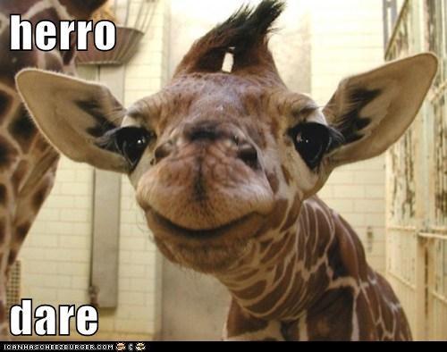 derp face giraffes hello hi o hai zoo - 5938644480