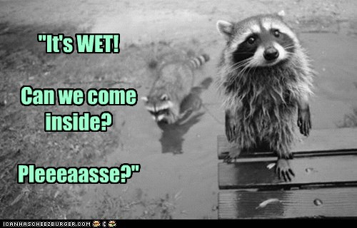 best of the week,come inside,Hall of Fame,pleading,please,raccoons,raining,Sad,wet
