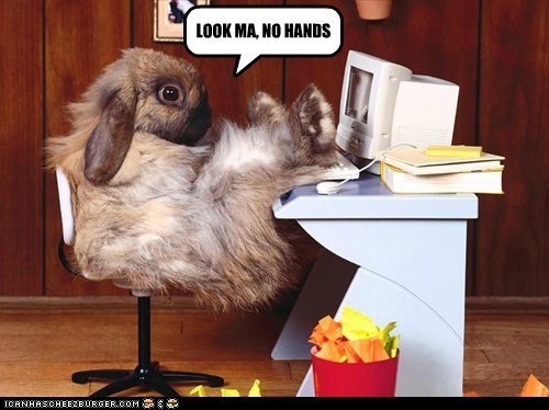 bunnies,bunny,computers,desks,Look Ma No Hands,no hands,rabbits