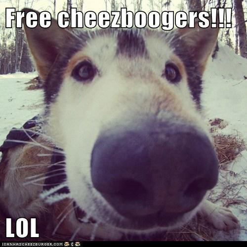 Cheezburger Image 5938865408