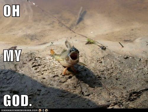 Cheezburger Image 5939081728