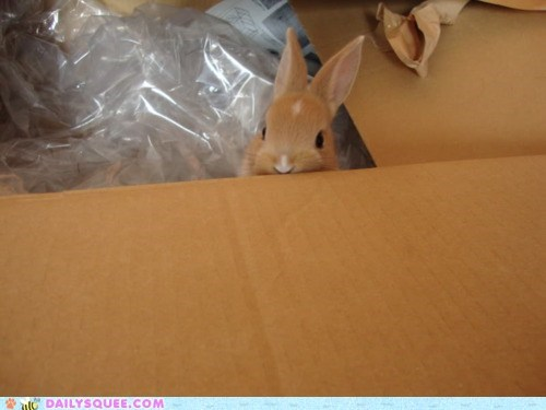 box,bunny,delivery,happy bunday,packing material