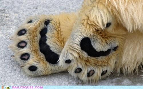 feet pads paws polar bear toes - 5939393024
