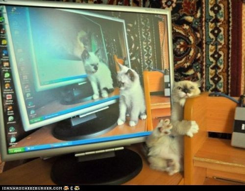 Catception,computers,cyoot kitteh of teh day,FAIL,fall,wat