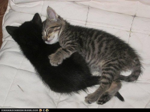 catnap,cuddles,cuddling,cyoot kitteh of teh day,hugging,hugs,nap,napping,sleeping,two cats