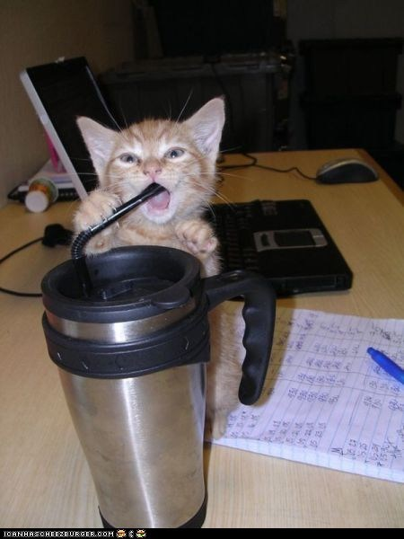 best of the week coffee cyoot kitteh of teh day drinking Hall of Fame mouth open mugs straws travel mugs - 5940012800