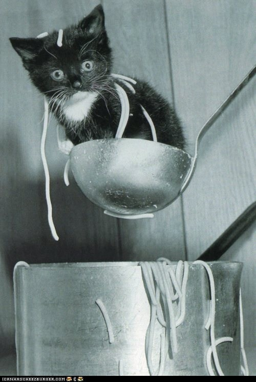 cyoot kitteh of teh day,food,ladle,noodles,pots,spaghetti,spoons