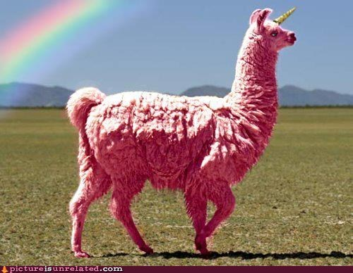 best of week,llama,rainbow,unicorn,wtf