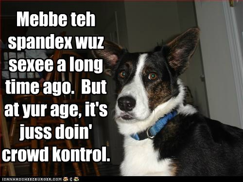 dogs funny mixed breed what breed