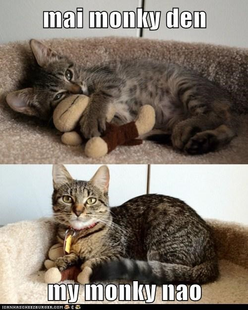 after before kitten mine monkey now then - 5940342272