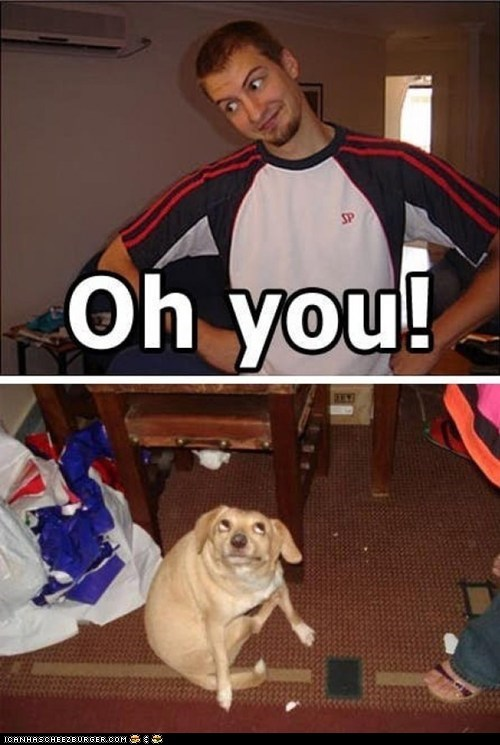 best of the week caption dogs expressions faces multipanel oh you silly you - 5940538112