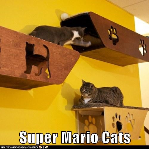 cat Cats mario pipes Super Super Mario bros teleporting tubes - 5940840448