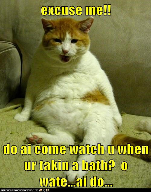 bath bathe cat clean lolcat shower stare watch water