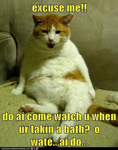 bath bathe cat clean lolcat shower stare watch water - 5940978432