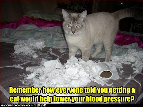 Blood cat everyone fact getting help lie lower pressure remember said