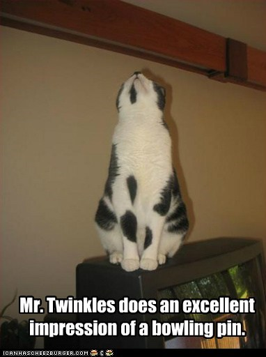 Mr. Twinkles does an excellent impression of a bowling pin.