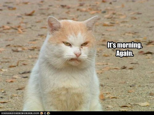 again,best of the week,blues,cat,Cats,do not want,grumpy,Hall of Fame,lolcat,monday,mornings,ugh