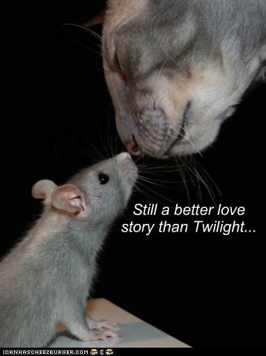 best of the week,better,cat,comparison,fell,Hall of Fame,love,meme,mouse,still,story,twilight