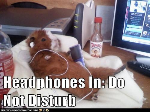 do not disturb guinea pig guinea pigs headphones Music privacy