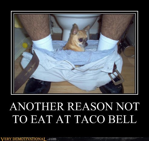 dogs hilarious pants taco bell - 5942539520