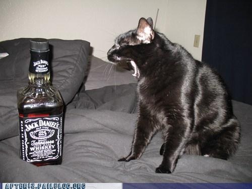 cat crunk critters jack daniels pet yawn - 5942644992