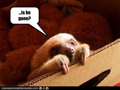boxes,gone,hiding,is he gone,peeking,scared,sloth,sloths