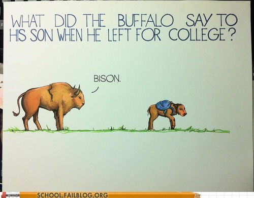 bison,buffalo leaves for college,by son,so punny