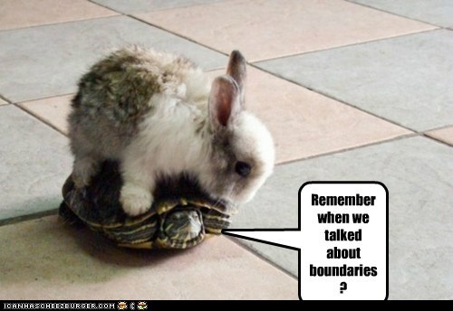 boundaries bunnies bunny Interspecies Love on top rabbits riding too close turtles - 5943312384