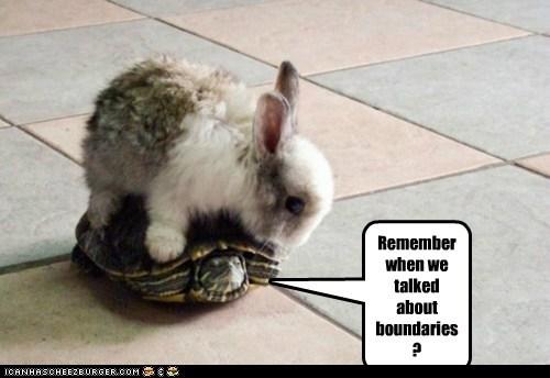 boundaries bunnies bunny Interspecies Love on top rabbits riding too close turtles - 5943312384