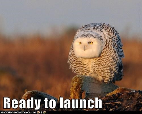 countdown flying launch Owl ready rocket spaceship
