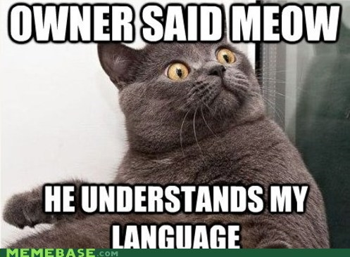 lolcats meme cats meme madness Memes meow - 5943957248