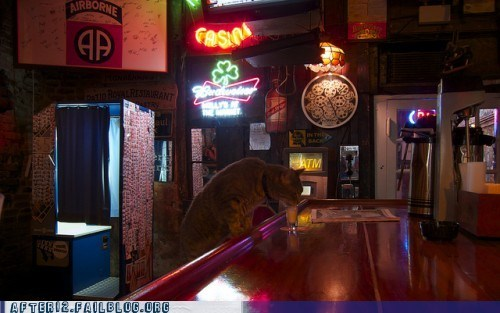 bar cat crunk critters drinking shots - 5943993856