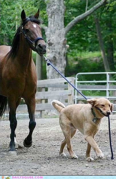 dogs horse interpecies love lead leash walk - 5944186624