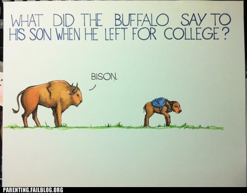 bison,buffalo,college