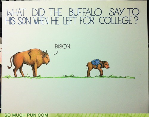 bison buffalo bye college Hall of Fame homophone homophones leaving son - 5944539136