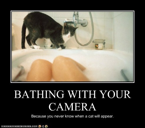 appear,bathing,camera,cat,know,never,prepared,ready,when,with