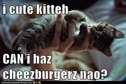 Cheezburger Image 5945829888