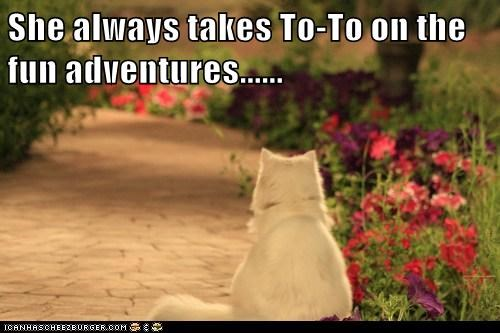 adventures,always,dogs,Dorothy,fun,jealous,takes,the wizard of oz,toto